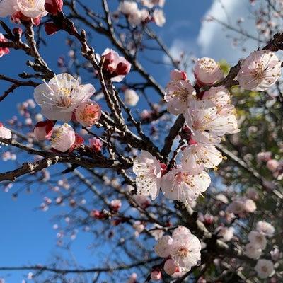 今年は違うことを試してみよう。春だし♪の記事に添付されている画像