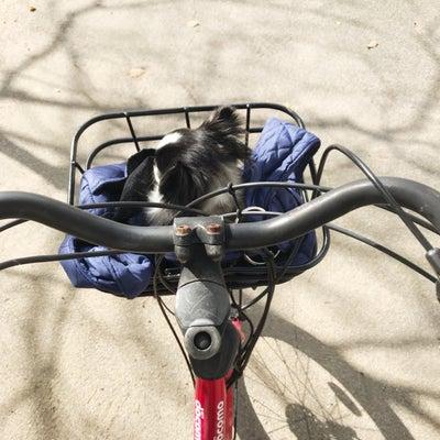 レンタサイクルは便利だった!の記事に添付されている画像