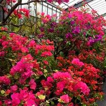 春旅2日 由布島編の記事に添付されている画像