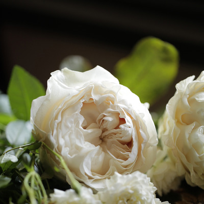 Today's choice バラ「オール4ピュア+」の記事に添付されている画像