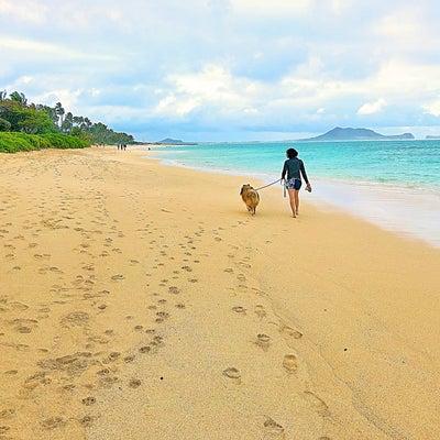 私のこと(身体を壊して~ハワイ移住まで)の記事に添付されている画像