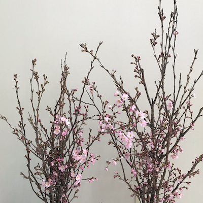 桜♡いただきました~♪の記事に添付されている画像