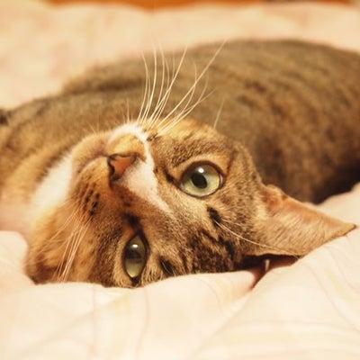 猫好きの猫アレルギーの記事に添付されている画像