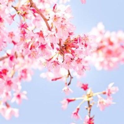 4月1日、一緒に春とお花を愉しみませんか?の記事に添付されている画像