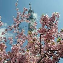 都内に早咲きの桜を見に行ってきました。の記事に添付されている画像