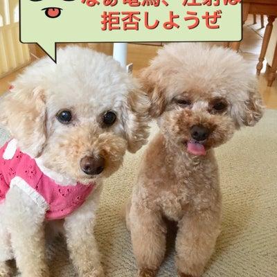 愛犬が狂犬病接種とワクチン接種をする前にの記事に添付されている画像