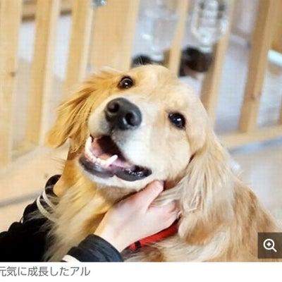 ガリガリだった大型犬、救出され、幸せな家に 少女とともに成長の記事に添付されている画像