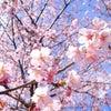 春はすぐそこの画像
