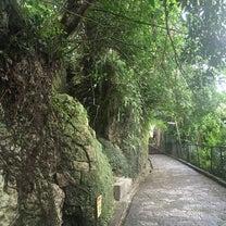 動画】(王道以外の)沖縄の話:首里城周辺の大アカギの記事に添付されている画像