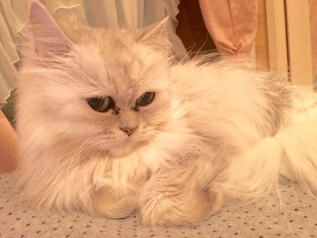 ホワイトデー 美味しいアップルパイ 卒業旅行に温泉タオルン 温泉 乳がん 猫 プリンセスのんの の記事より