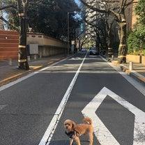 2019年桜開花予想の記事に添付されている画像