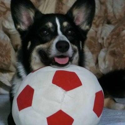 サッカーボールで大暴れ♪の記事に添付されている画像