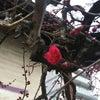 上下の春の画像