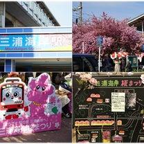 三浦海岸桜まつり2019の記事に添付されている画像