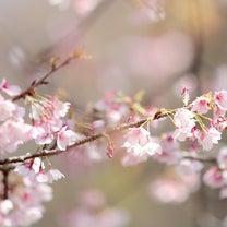 咲き出した桜と小鳥達の記事に添付されている画像