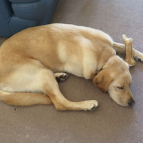 犬と幸福の記事に添付されている画像