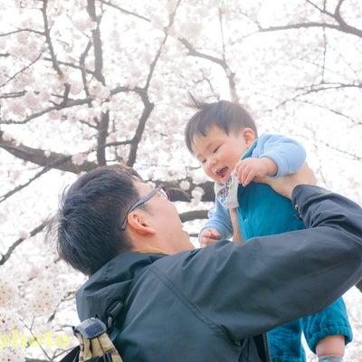 3/31砧公園(用賀駅徒歩20分)桜撮影会の記事に添付されている画像