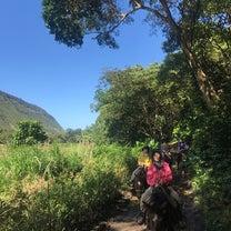 ワイピオ渓谷をとことん堪能しよう!の記事に添付されている画像