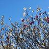 春めくときの情感豊かな日本語の画像