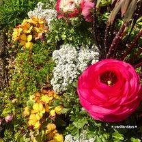 花壇の花と多肉の花芽&お気に入り多肉(ᐥᐜᐥ)♬の記事に添付されている画像