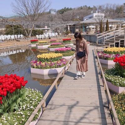 栃木あしかがフラワーパークの記事に添付されている画像