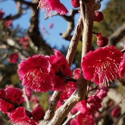 春分の日を前に自分軸を整えることの記事に添付されている画像