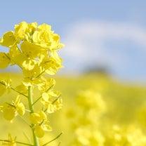 春の畑の野菜を現場から実況中継!の記事に添付されている画像