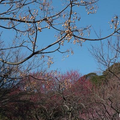 私の暮らしている土地の植物・生き物・風景がテーマです〈景色〉No.10780の記事に添付されている画像