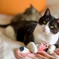 キャプテン・マーベルの主役は、猫!?の記事に添付されている画像