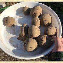春の植え付け2019【ジャガイモ】の記事に添付されている画像
