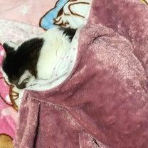 みーちゃんの昼寝。&消しゴムゴシゴシ。&ひろばさんの手形スタンプ。&ピエール瀧さの記事に添付されている画像