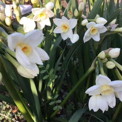 春めいて、、、。の記事に添付されている画像