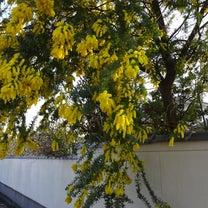 花の寺・円照寺 ☆ 境内を花散歩の記事に添付されている画像