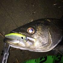 2019年3月16日 旧江戸川釣行の記事に添付されている画像