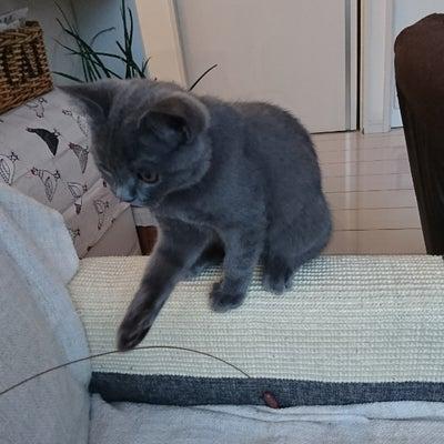 愛猫との甘い暮らしの記事に添付されている画像