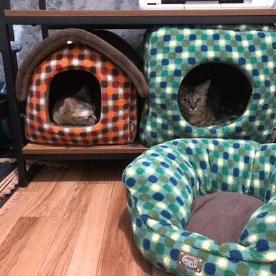 猫の居心地の良い部屋を目指して、アイリスオーヤマのソファベッド、キューブハウス、の記事に添付されている画像