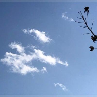 雲とモンステラとベベたんに...干芋の記事に添付されている画像