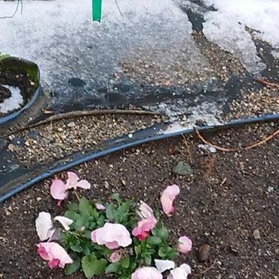 雪とカミナリの記事に添付されている画像