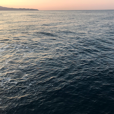 12日ぶりのグレ釣りの記事に添付されている画像