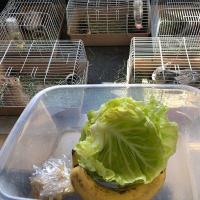 ウサギさん達のお食事を…の記事に添付されている画像