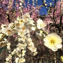 京の都でハスワーク♡in如水庵さんの記事に添付されている画像