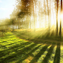 成長させ、光を受け取りやすくなるの記事に添付されている画像