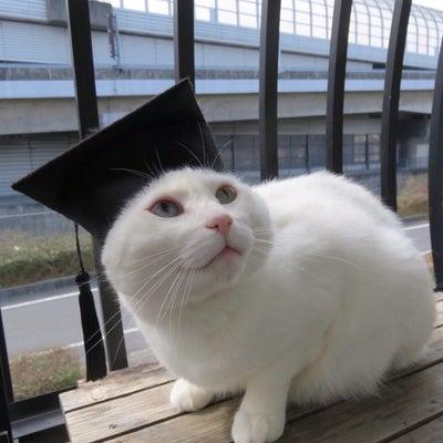卒業生代表の記事に添付されている画像
