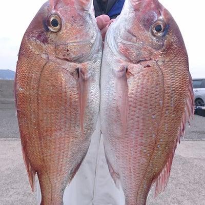 富浦共栄丸マダイ船の記事に添付されている画像