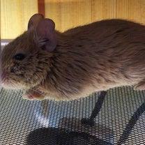 まめちゃんと、豆のようなネズミの記事に添付されている画像