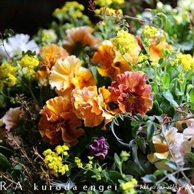 春のパンジー寄せ植えの記事に添付されている画像