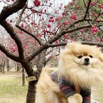 寒桜の記事に添付されている画像