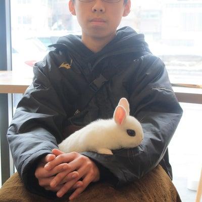 立ち耳ウサギの魅力の記事に添付されている画像