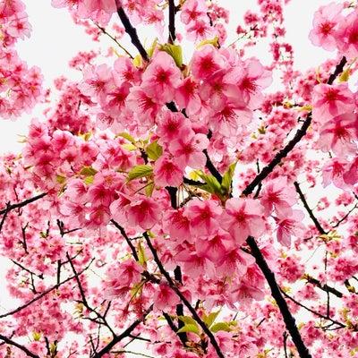 春のチャリティーイベントの記事に添付されている画像