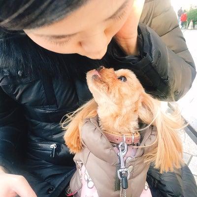 愛犬が盗まれる!犬泥棒の手口を公開の記事に添付されている画像
